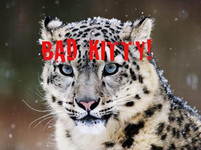 Bad Kitty!